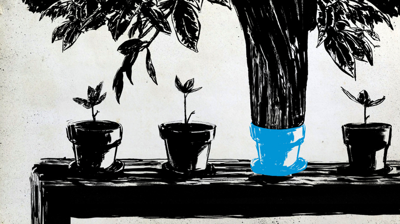 Black and white image of potted plants